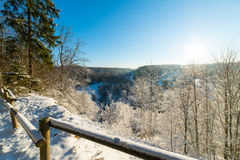 Snowy winter forest landscape with snow covered trees Stock Image
