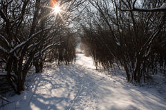 Snowy winter forest and pathway with trails and sunbeam. The snowy winter forest and pathway with trails and sunbeam Royalty Free Stock Images