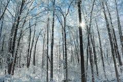 Snowy Winter Forest Scene Stock Photos
