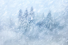 Snowy winter forest scene Royalty Free Stock Photos