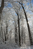 Snowy Winter Forest Scene Royalty Free Stock Images