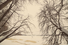 Snowy winter forest with snow covered trees - aged photo Royalty Free Stock Photo