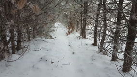 Snowy winter in forest. Snow covered trees. stock video