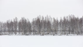 Snowy winter forest with snow covered trees Stock Photography