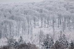 Snowy winter forest in the Taunus Royalty Free Stock Image