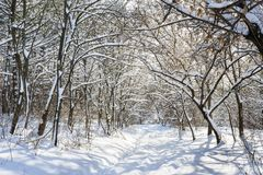 Snowy winter forest Stock Photos