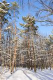 Snowy winter forest Stock Photography