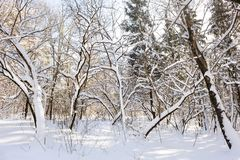 Snowy winter forest Stock Image