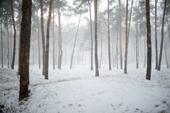 Snowy winter forest with trees Stock Images