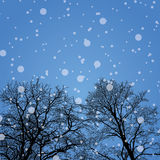 Snowy winter forest with trees Royalty Free Stock Photo