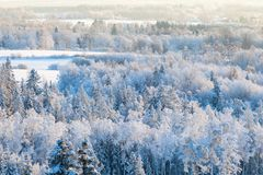Snowy winter forest view Royalty Free Stock Image