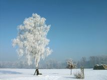 Snowy winter, frost covered tree. Winter scene with snow covered ground and hoarfrost covered tree on a field. Natural blue sky without any cloud. White frost on Royalty Free Stock Photo