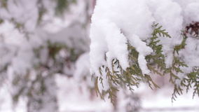 Snowy winter. Good New Year spirit. stock footage