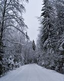 Snowy-Winter im Wald stockfotos