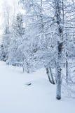 Snowy winter landscape Royalty Free Stock Image