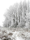 Snowy winter landscape. Frozen trees and branches in winter stock photography