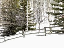 Snowy winter landscape. Stock Photo