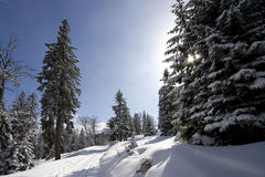Snowy winter landscape. On Jahorina mountain near Sarajevo, Republika Srpska, Bosnia Royalty Free Stock Photo
