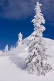 Snowy winter landscape. On Jahorina mountain near Sarajevo, Republika Srpska, Bosnia Royalty Free Stock Images