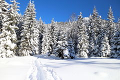 Snowy winter landscape in the alps Royalty Free Stock Photo