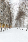 Snowy winter landscape of the city. The path in the snow between the trees birch Stock Images