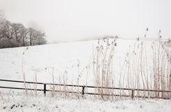 Snowy winter landscape with a fence and rushes Stock Photo