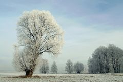 Snowy winter landscape, frost covered tree Stock Photo