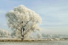 Snowy winter landscape with frosted tree. Landscape of lonely frozen tree on a meadow at sunrise. White winter frost on a crown shining in the morning sunlight Royalty Free Stock Image