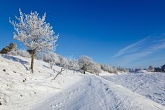 Snowy winter landscape Stock Photos