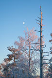 Snowy winter landscape with moon Stock Photo