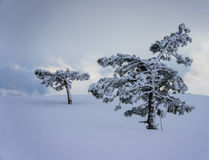Snowy winter landscape in the mountains Stock Photo
