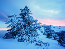 Snowy winter landscape in the mountains Stock Image