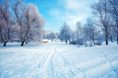 Snowy Winter Landscape Royalty Free Stock Image
