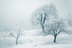 Snowy winter landscape with snow-clad trees Royalty Free Stock Photos