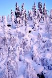 Snowy winter of 2018. Landscape with snow covered forest Royalty Free Stock Image
