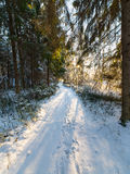 Snowy winter landscape with snow covered trees Stock Photos