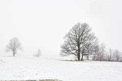 Snowy winter landscape with tree Royalty Free Stock Photos