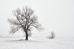 Snowy winter landscape with tree Stock Photography