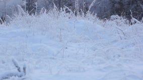 Snowy winter landscape stock video