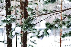 Snowy winter in lapland finland, snow coveres all thetrees and branches royalty free stock photos