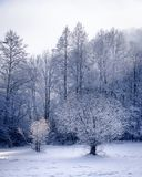 Snowy winter meadow and forest. Two small trees on a snowy meadow with forest in the background Royalty Free Stock Photos