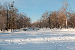 Snowy winter morning in the park Royalty Free Stock Photos