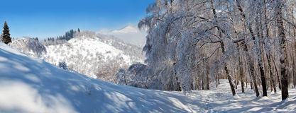 Snowy winter in mountain forest Royalty Free Stock Photography