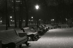 Snowy winter night park. The snowy benches in the winter night park. Black and white Stock Image