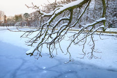 Snowy winter in the park. Of Gdansk Oliwa, Poland Royalty Free Stock Image