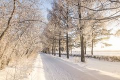 Snowy winter Park with bushes and fir trees, Russia, Ural Stock Photography