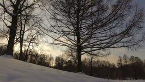 Snowy winter park stock video footage