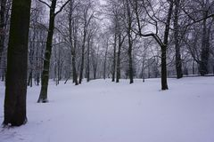 Winter in Park 12. Snowy winter in park. Little river and trees. White snow on grass. Light day Royalty Free Stock Images