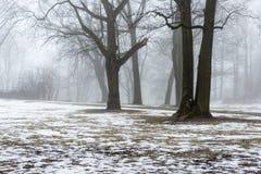 Snowy winter park in mist Stock Image