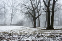Snowy winter park in mist Stock Photography